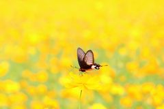 Swallowtail butterfly on flower stock photography