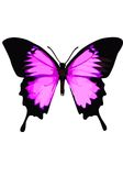 Swallowtail butterfly, butterfly pink on a white background. Royalty Free Stock Image