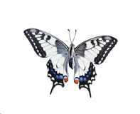 Swallowtail butterfly isolated on white. Background Stock Photos