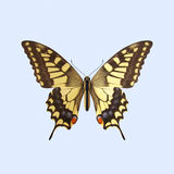 Swallowtail Butterfly - Papilio Machaon. The Three-dimensional Swallowtail Butterfly, scientifically known as Papilio Machaon.  on Background Royalty Free Stock Photos