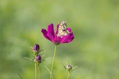Swallowtail butterflye na kosmosie fotografia stock