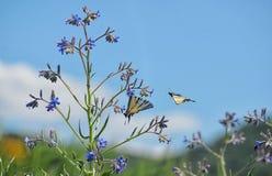 Swallowtail Butterlflies op bloem royalty-vrije stock afbeelding