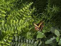 Swallowtail butterly on plants Stock Photos