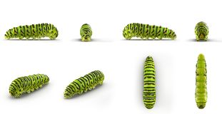 Swallowtail caterpillar or Papilio Machaon renders set from different angles on a white. 3D illustration. Swallowtail caterpillar or Papilio Machaon renders set Stock Image