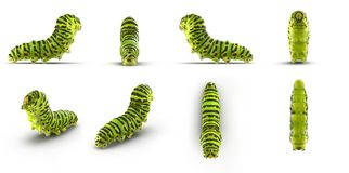 Swallowtail caterpillar or Papilio Machaon renders set from different angles on a white. 3D illustration. Swallowtail caterpillar or Papilio Machaon renders set Royalty Free Stock Images