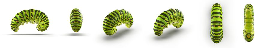 Swallowtail caterpillar or Papilio Machaon renders set from different angles on a white. 3D illustration. Swallowtail caterpillar or Papilio Machaon renders set Royalty Free Stock Photography