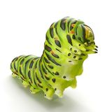Swallowtail caterpillar or Papilio Machaon on a white. 3D illustration. Swallowtail caterpillar or Papilio Machaon on a white background. 3D illustration Stock Photography