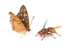 Swallowtail de la mariposa Foto de archivo