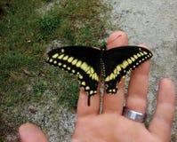 Swallowtail fjäril på en hand med bröllopmusikbandet arkivbild