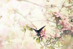 Swallowtail i vår Arkivfoto