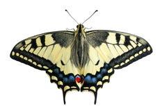 Swallowtail, isolado imagens de stock royalty free