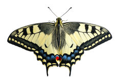 Swallowtail, isolated Royalty Free Stock Images