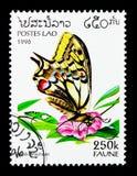 Swallowtail (machaon) de Papilio, serie da fauna, cerca de 1996 fotos de stock