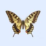 Swallowtail motyl - Papilio Machaon Zdjęcia Royalty Free