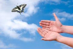 Swallowtail que voa ao céu imagens de stock royalty free