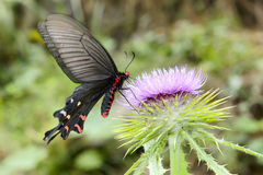 swallowtail Rojo-hecho bolso Fotos de archivo