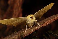Swallowtailedmot. Royalty-vrije Stock Afbeeldingen
