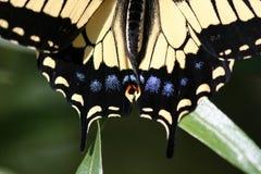 Swallowtails Heck lizenzfreie stockfotografie