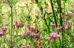 Swallowtailvlinder op een achtergrond van wildflowers royalty-vrije stock afbeelding