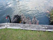 Swam in a park in Australia Stock Photo