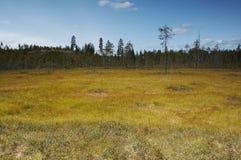 Swamp. Landscape Stock Photos