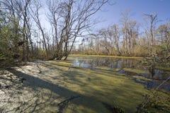 swamp 13 arkivbilder