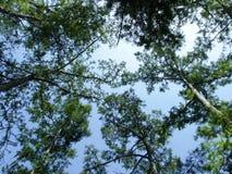 swamp Royaltyfria Foton