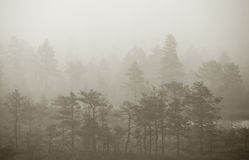 Swamp. Cold and misty morning in estonian swamp Royalty Free Stock Photography