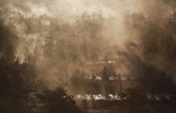 Swamp. Cold and misty morning in estonian swamp Royalty Free Stock Photos