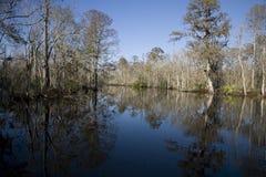 swamp 18 Arkivbilder