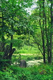 Swamp. In the forest. Russia stock images