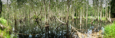 Swamp. Panoramic view of a swamp and reflections on water surface Stock Photo