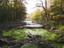 Swamp Stock Photos