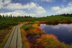 swamp Royaltyfri Fotografi