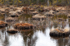 Swamp Royalty Free Stock Images