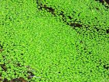 swamp fotografia de stock royalty free