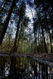Swamp. A swamp nature image with a water reflection and forest stock photo