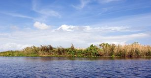 Swamp. St. John's River, Orlando, Florida Royalty Free Stock Images