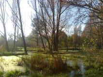 swamp Imagens de Stock Royalty Free