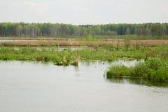 swamp Fotografering för Bildbyråer