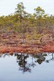 swamp imagem de stock royalty free
