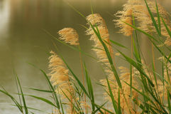 swamp Royaltyfri Bild