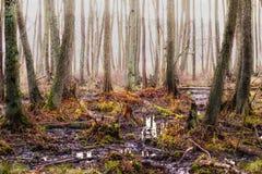 swamp Royaltyfri Foto