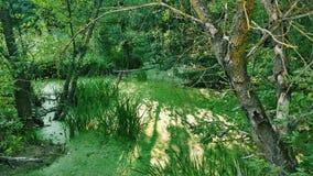 swamp arkivfoto