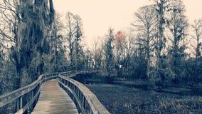 swamp arkivfoton