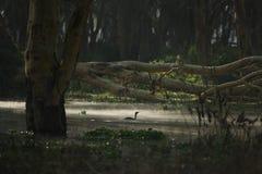 swamp Arkivbilder