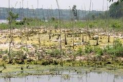 Swamp area Royalty Free Stock Photo