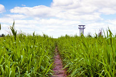 Swamp area and lookout tower Royalty Free Stock Photos