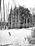 The swamp. Artistic look in black and white. Stock Photo