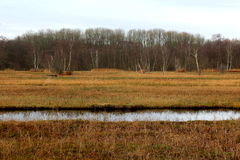 Swamp in autumn Stock Photo